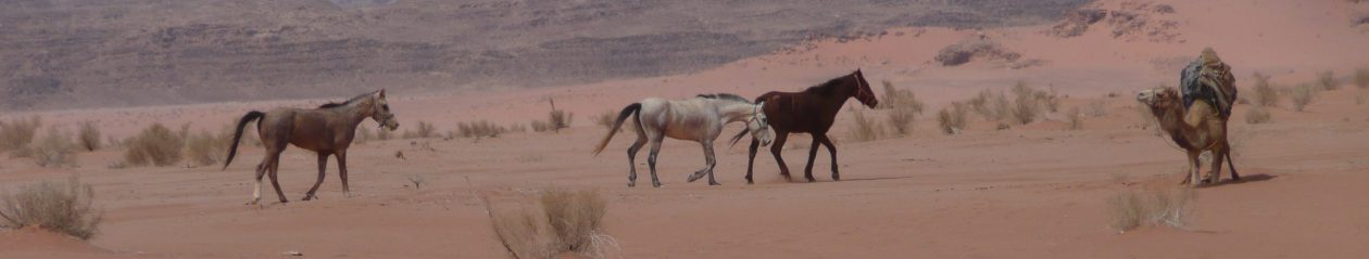 Remembering a Desert Horse