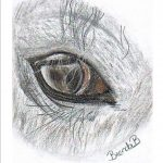Eye of my dearest desert horse Samiha, drawing