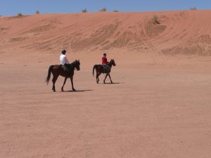 Ready for a canter? At Wadi Rum
