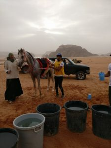 Endurance, still early, first water stop, Wadi Rum, Jordan