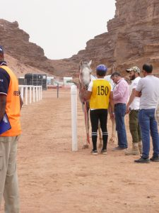 Endurance Wadi Rum, test with the vet.