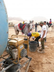 Drinking, showers of the horse at the water point, Endurance, Wadi Rum