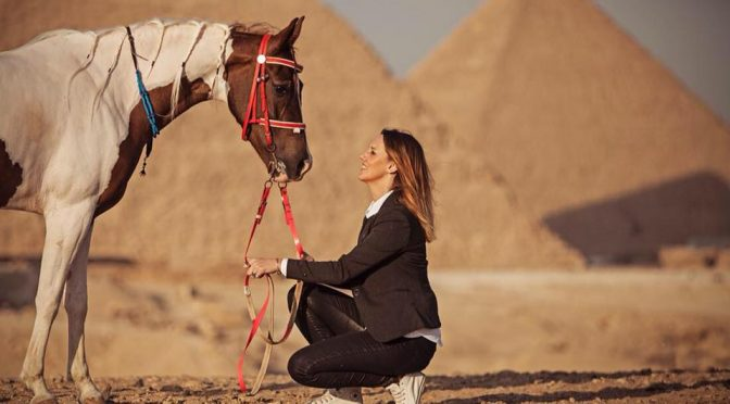 Ancient Arabians? A closer look at ancient Egyptian horses