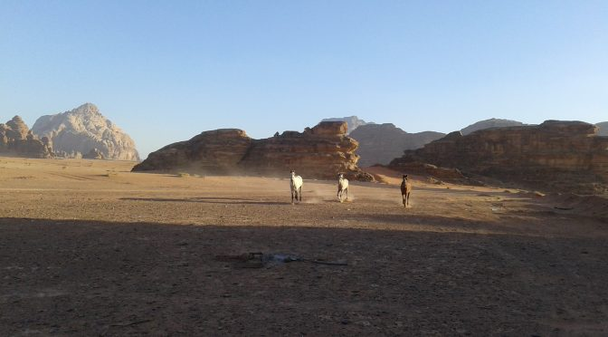 Meeting with the horses in Wadi Rum