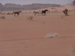 Mehemmak, Barq, Theeb Abiat enjoying the desert of Wadi Rum, Jordan